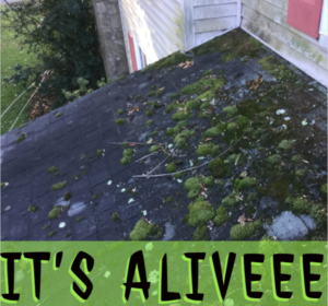 roof cleaning moss removal